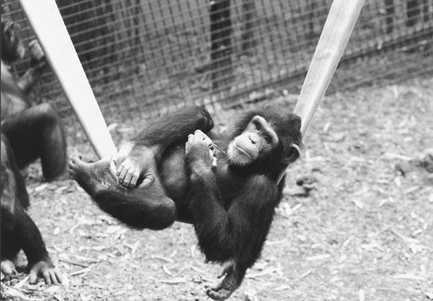 Senate Baltimore Zoo Maryland